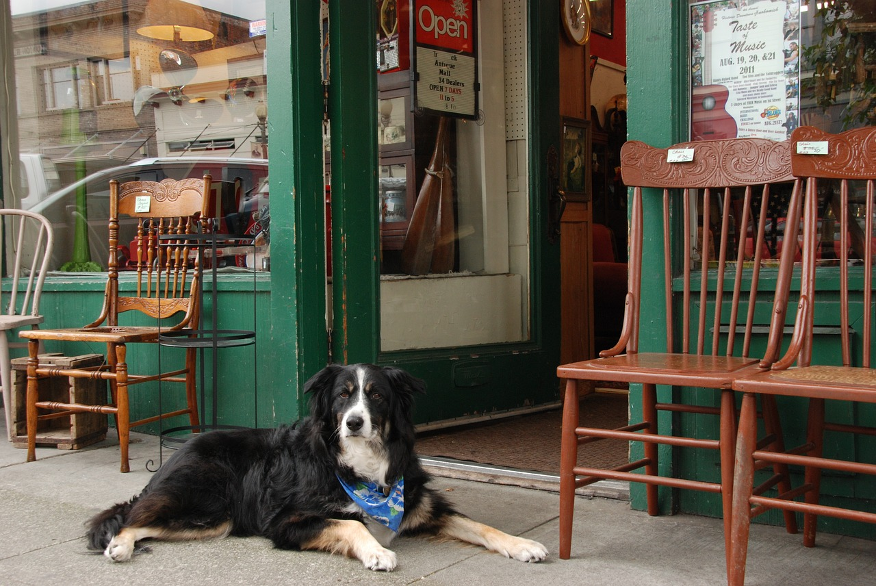 A dog in front of a store.